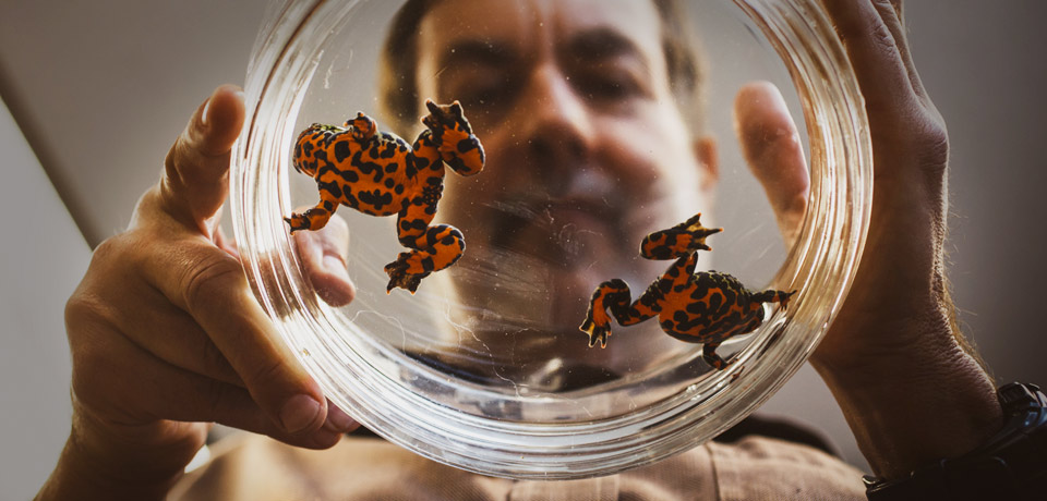 Reed College professor Bob Kaplan examines toads in Intro to Biology