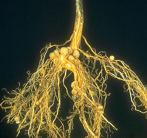 rhizobium bacteria and plants relationship counseling