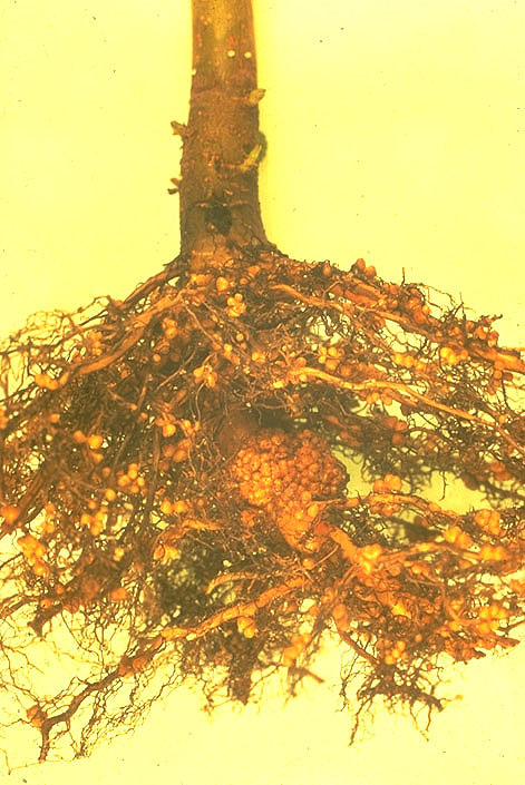 part i the range of organisms that can fix nitrogen