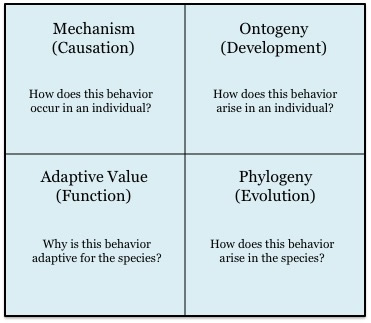 niko tinbergens four questions essay Nikolaas tinbergen provided an elegantly comprehensive guide to behavioral  research  tinbergen's four questions (plus one) make the goals of an  how -is-culturebiological-six-essays-and-discussions-essay-4-by.