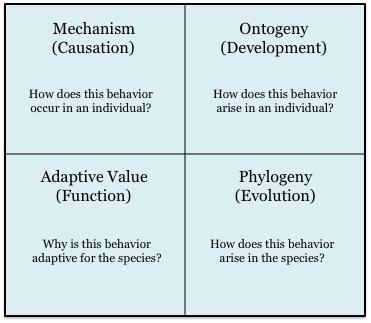 social organization examples