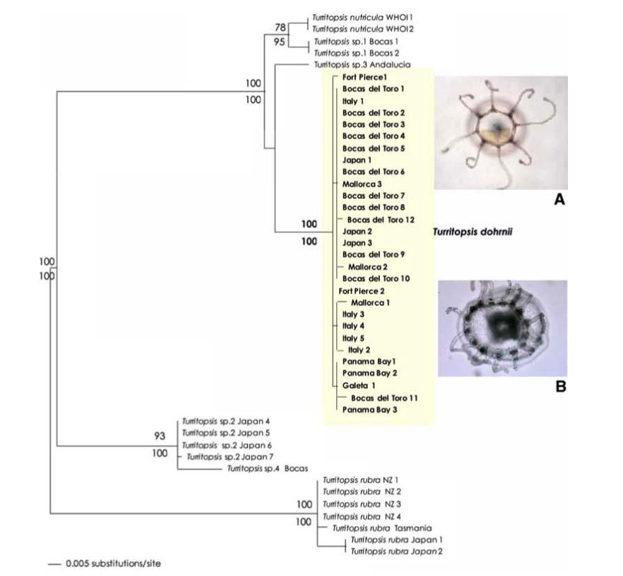 phylogene 2009