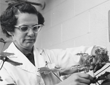 Photo of Prof. Helen Stafford